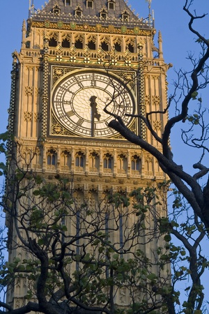 The clockface of the famous Big Ben tower clock with a tree in the sunset lighting photo
