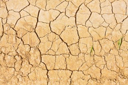 Closeup shot of an part of cracked land  photo