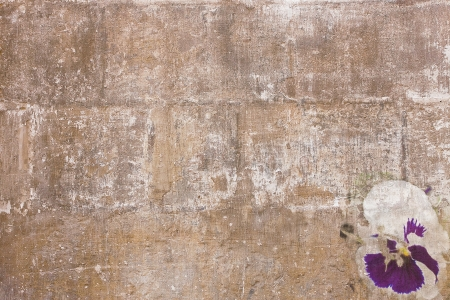 Old paint texture with violet-white pansy Stock Photo - 16240753