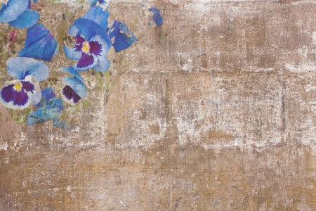 Old paint texture with several blue pansies Stock Photo - 16240752