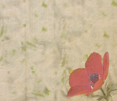 grange: Square vintage paper texture with single red anemone