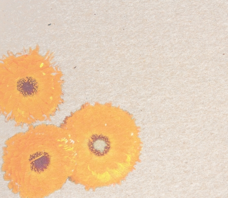 Square vintage paper page with three orange chrysanthemums Stock Photo