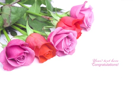 Bunch of two-color roses for a postcard background photo