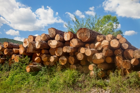 Closeup on log pile under blue sky at local timber works area Stockfoto