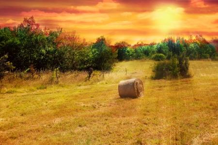 crop margin: Hayfield con un solo haymow al atardecer