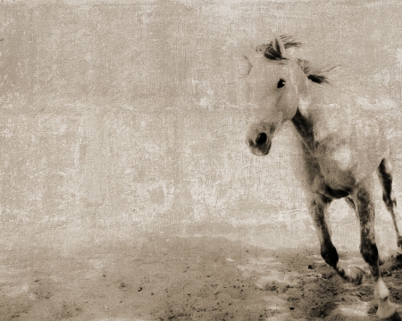 Vintage textured postcard with a running horse photo