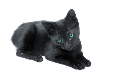 Cute black kitten with green eyes on white background photo