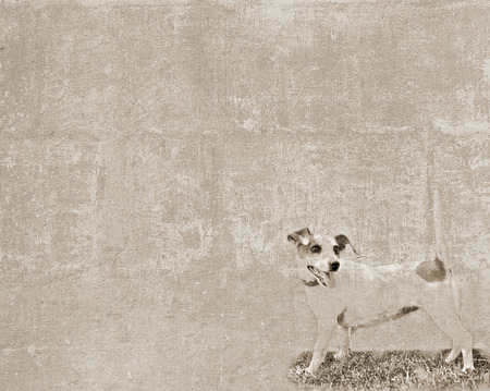 Abstract vintage textured background with a sketch of a small dog  photo