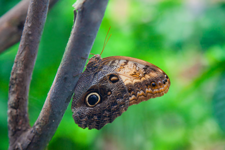 The Emperor Butterfly sitting on a tree trunk photo