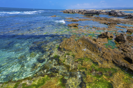 sea weed: Clear lucid waters with sea weed at rocky seashore