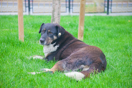 waiting glance: Big lonely street dog on the grass looking sad Stock Photo