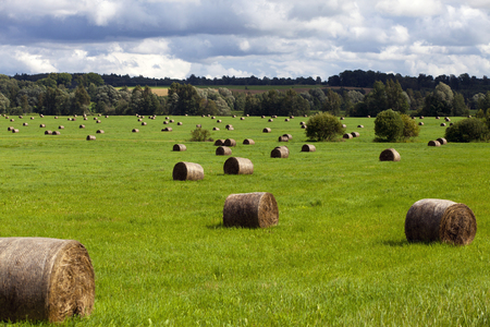 Haystacks ready to be collected in the green field under sunlight