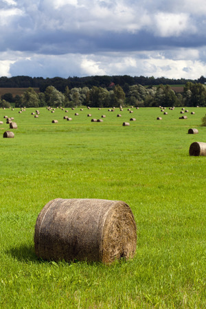haymow: Large haymow in the green grass (vertical) Stock Photo