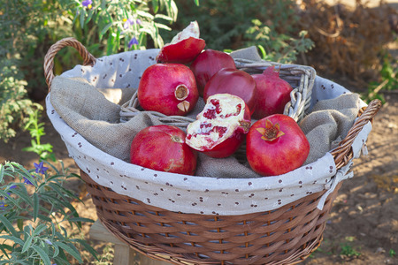 Basket of red pomegranates in the garden in the fall