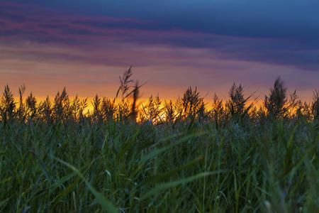 Amazing sunset in the green field with grass silhouettes Stock Photo