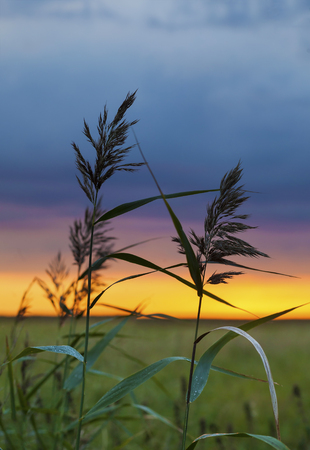 Two blades of field grass against amazing colorful sunset