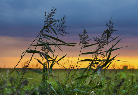 Windy sunset in the field with swaying grass and amazing sunset colors Stock Photo