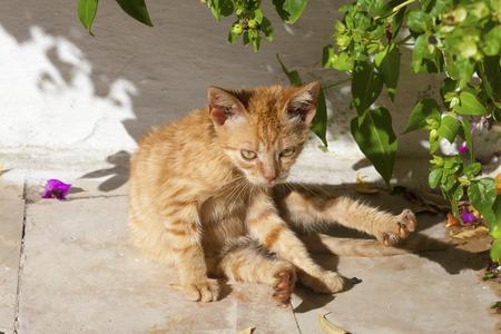 under a tree: Ginger street kitten washing under a tree Stock Photo