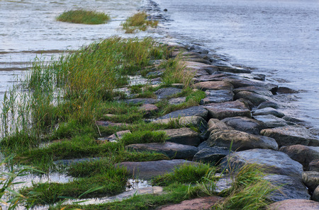 Green grass grown over natural stony breakwater (tinted image, cold tint)
