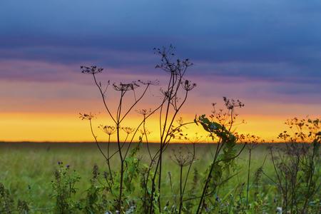 Blades of dried autumn grass against amazing sunset skyline