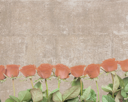 Vintage textured postcard with one side lined with orange rose buds