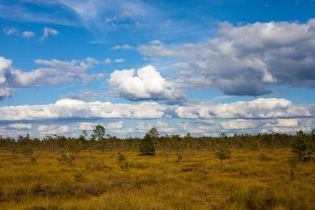 Vast beautiful grass field over a swamp in Nigula nature reserve, Estonia