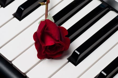 A single beautiful red rose lying on top of a piano keyboard  photo