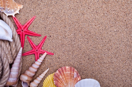 seashells and starfish with sand as background photo