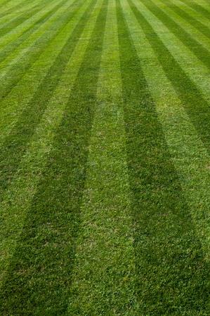 green natural grass of a Football soccer field Archivio Fotografico