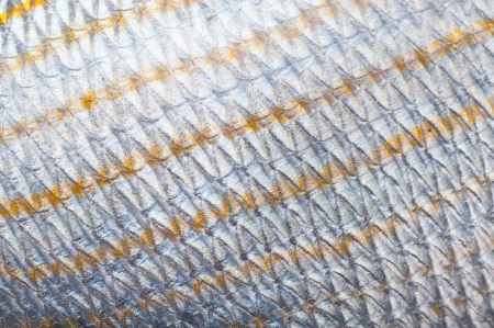 Macro shot of Fish scales  natural texture, lateral line is seen photo