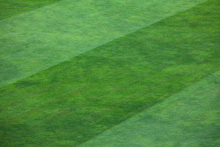 filling line: Vibrant green grass filling a field.  The grass is divided into thick vertical lines with one line containing a deep shade of green grass and the other line a lighter shade.