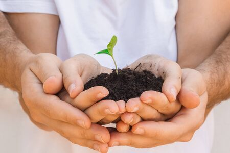 Couple holding and caring a little growing plant. Eco friendly and natural concept. Plant and soil on their hands. Close up to the hands. No faces. Hug.