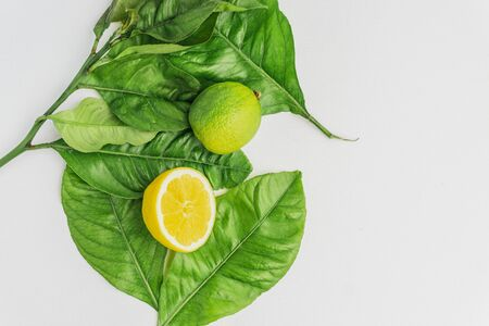 Summer background of half lemon and a lime above lemon tree leaves. Green and fresh background. Top View.