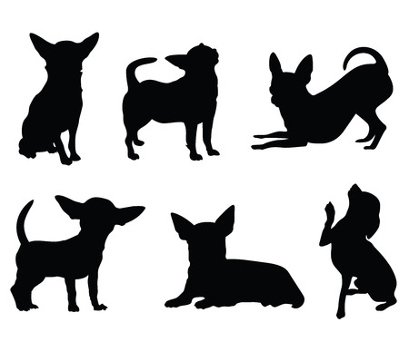 chihuahua dog illustration set
