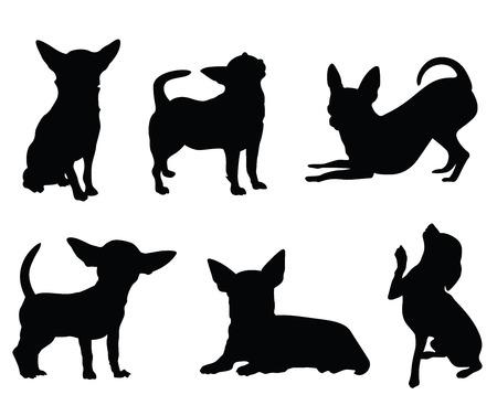 chihuahua dog: chihuahua dog illustration set