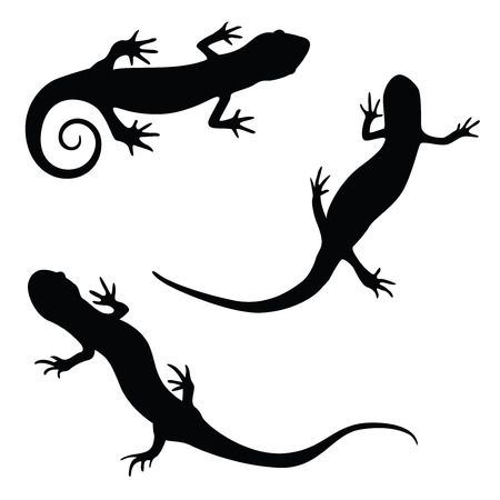 curly tail: salamander silhouette illustration set