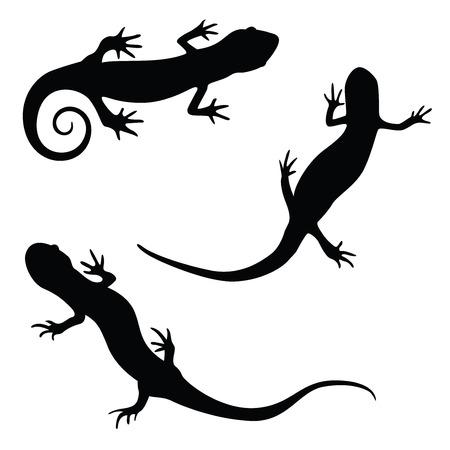 salamandra: salamandra silueta ilustración conjunto Vectores