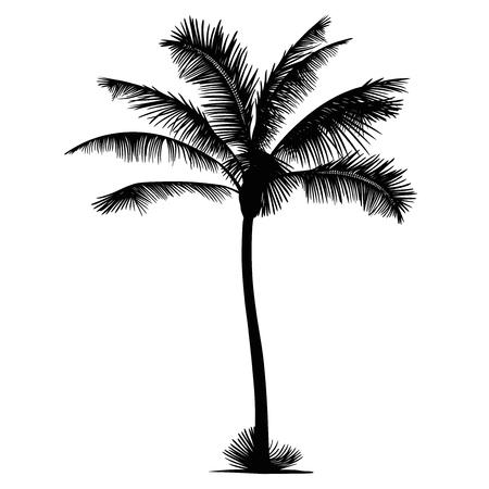 palm tree: palm tree silhouette