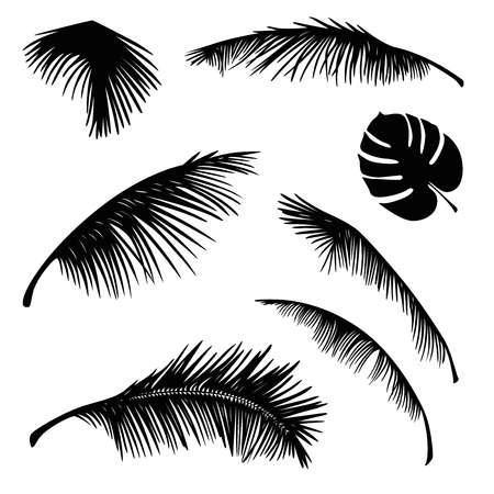 frond: tropical palm leaves silhouette