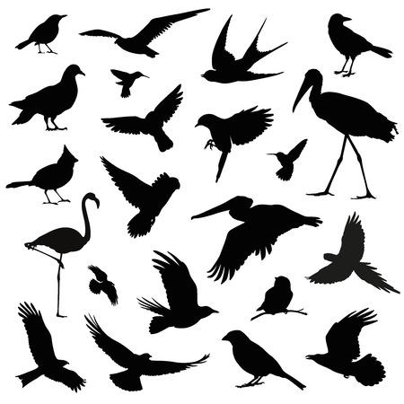 pajaros: pájaro silueta ilustración conjunto