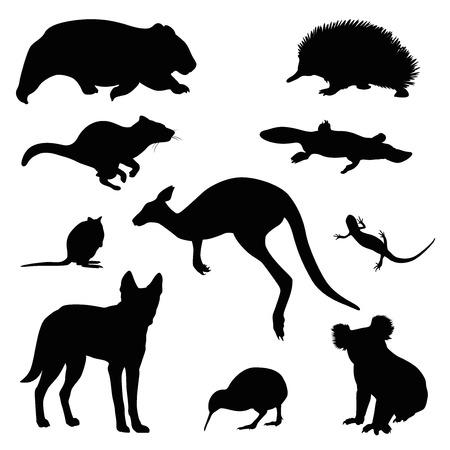 animal australiano conjunto de vectores Ilustración de vector
