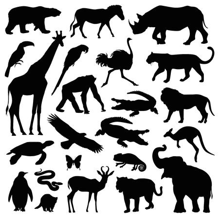zoo animal illustration set Ilustracja