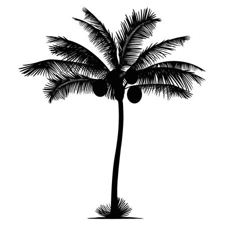 Palm-kokosnoot silhouet