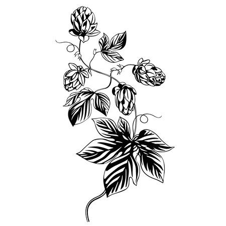 hops plant illustration Ilustracja