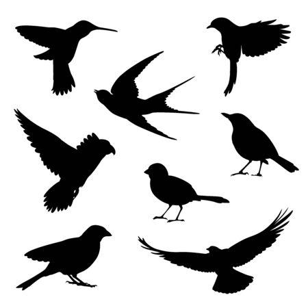 conjunto de ilustración de silueta de pájaro