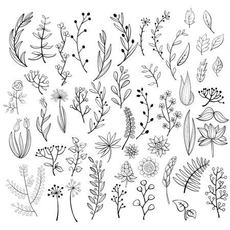 Conjunto de elementos florales de doodle. Ilustración de vector