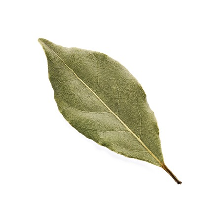 Aromatic bay leaf isolated on a white background. 스톡 콘텐츠
