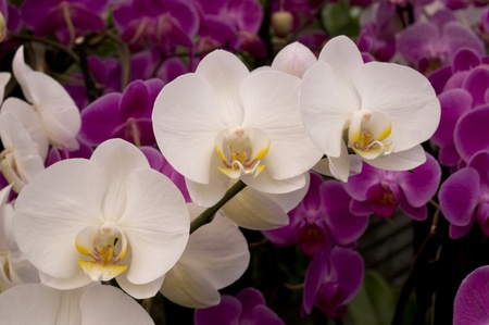 beautiful orchid plant photo