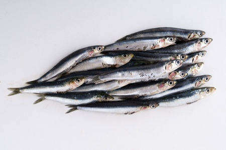 italian fresh anchovies photo