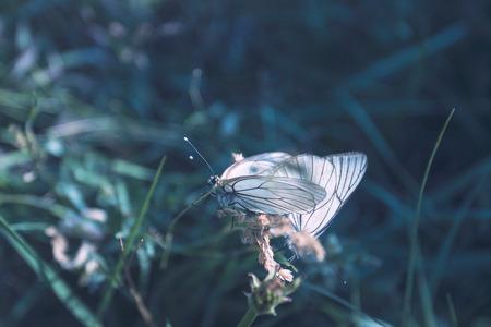 arachnids: summer butterfly and the flower